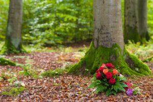 Baum Straß-Abschied nehmen-Bestattungen Hafa-Rottweil