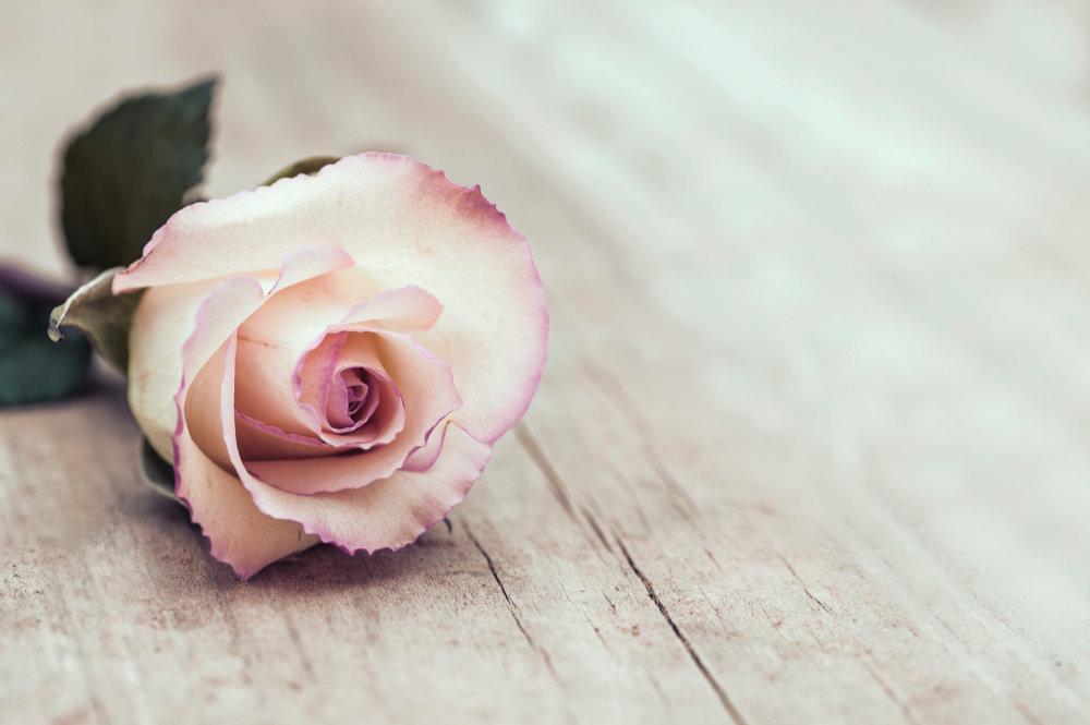 Close-up view of a single, vintage rose on rustic wooden surface