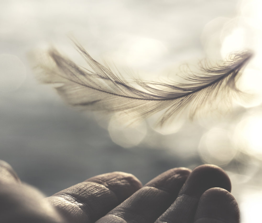 meeting between a delicate feather of a woman's hand